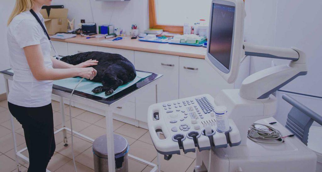 Finance for Veterinary Practice